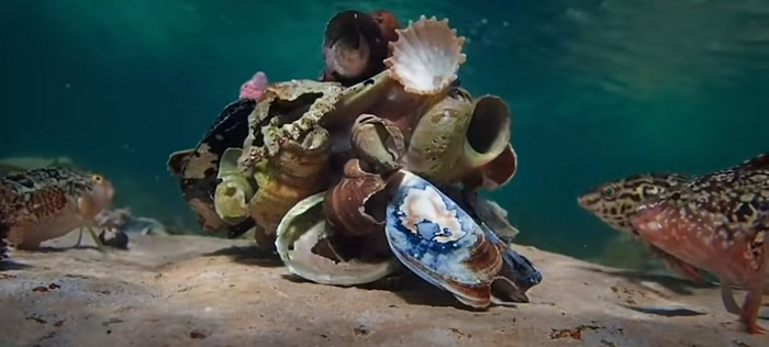 La sagesse de la pieuvre